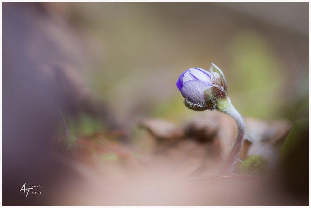 Kevade märk